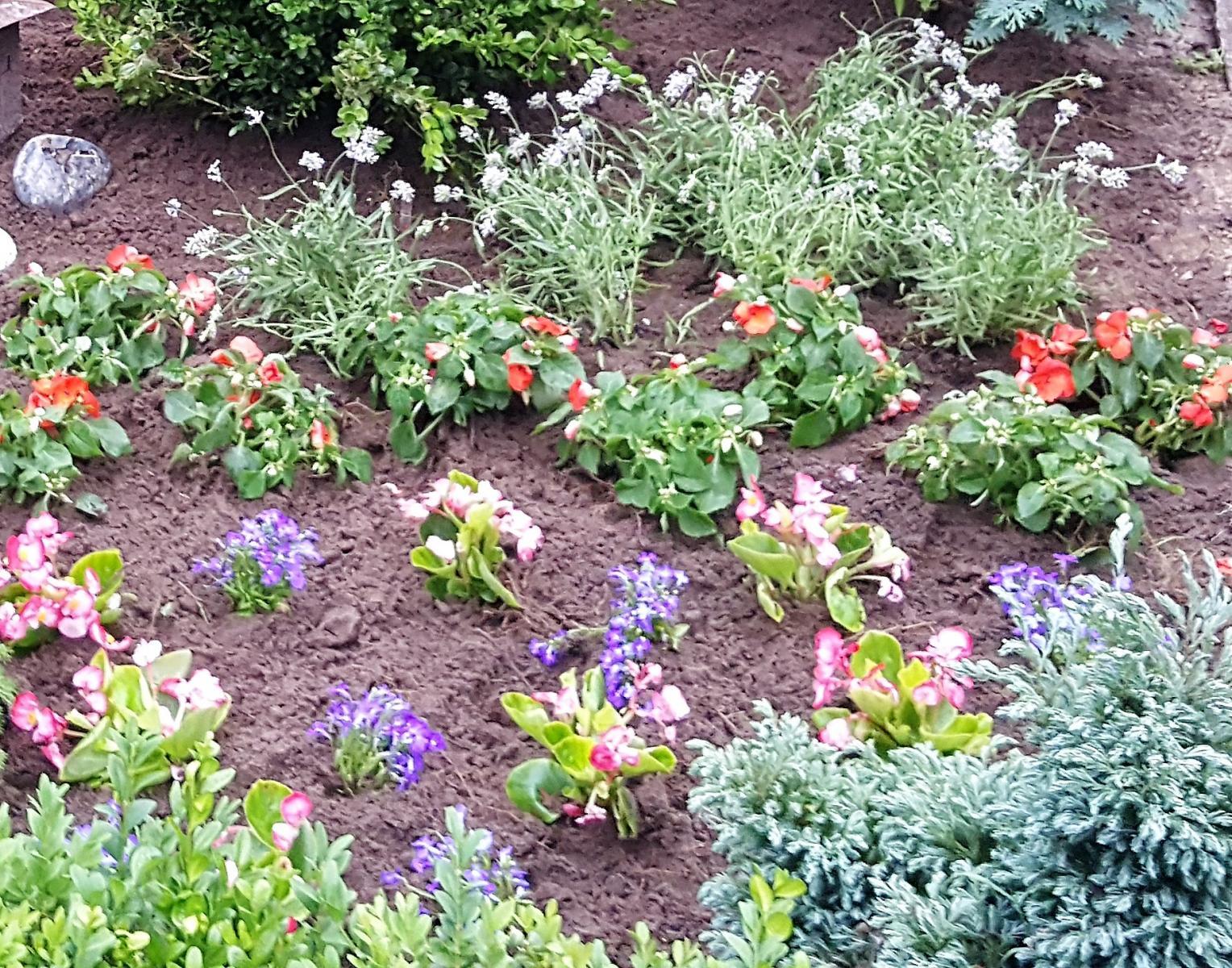 Wechselbepflanzung