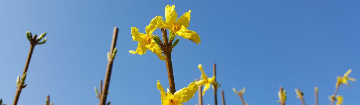 gelbe Blumen